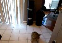 Kissa ääntelee