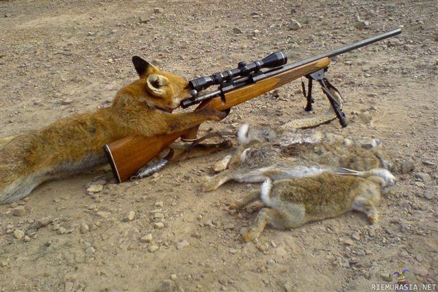 ketun metsästys