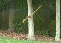Oravaa kiusataan