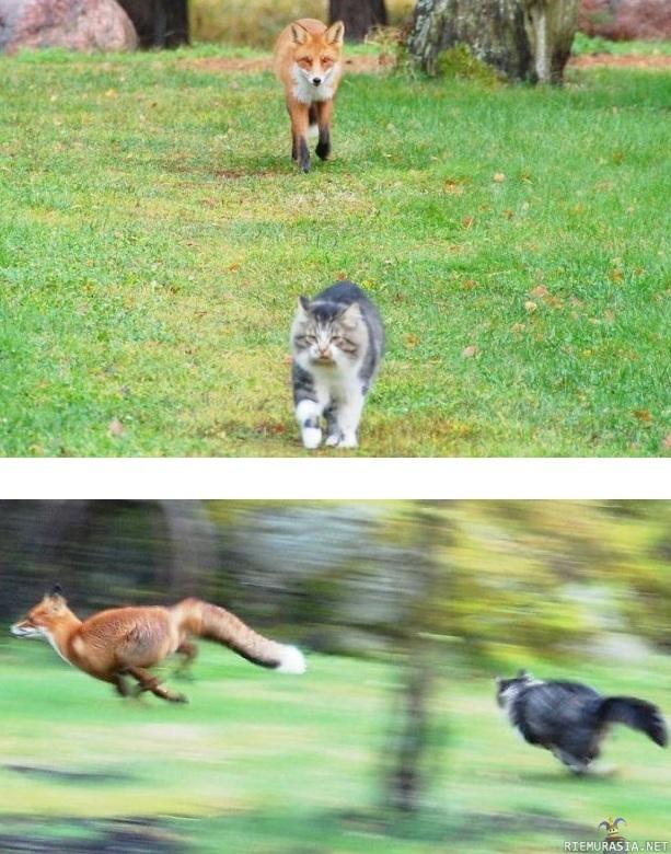 Kettu Ja Kissa