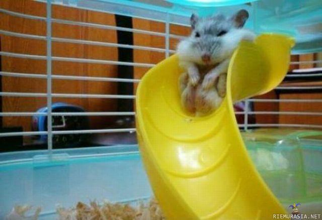 Hamsterin Pesä