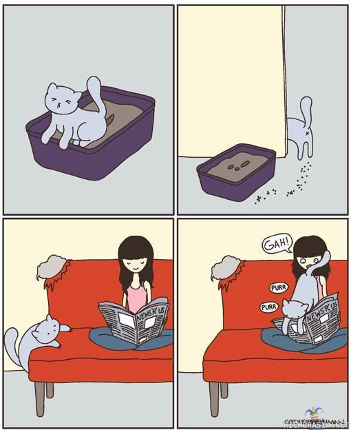 Musta kissa pillua kissa