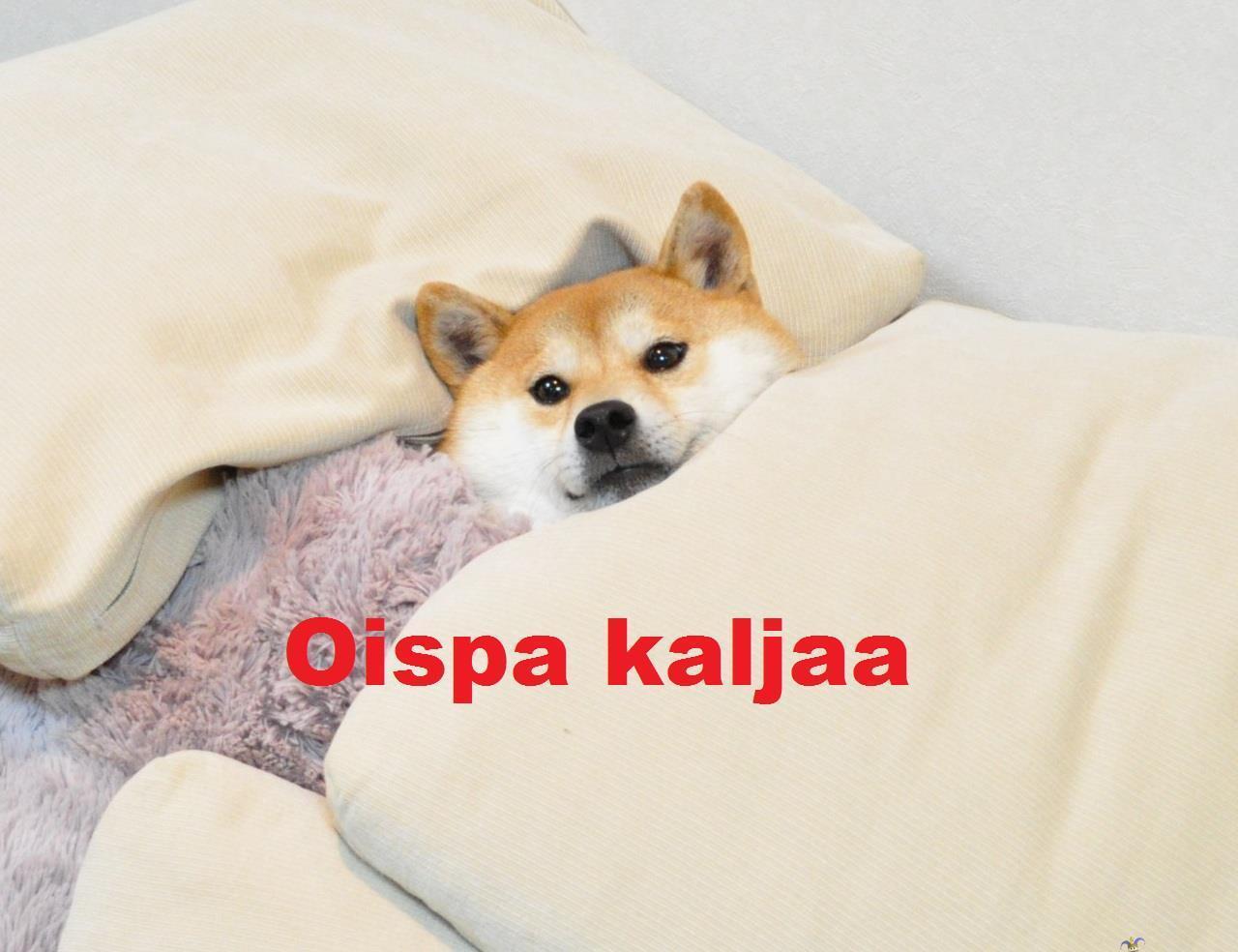 Oispa Kaljaa Meme