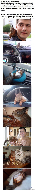 Lemmikki Orava