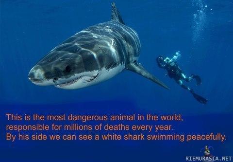 Vaarallisin Hai