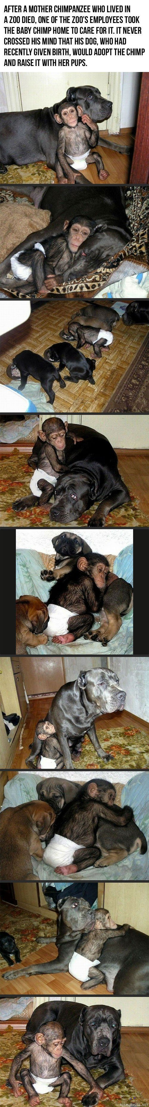 Adoptoi Koira