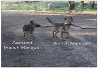 Branch managers