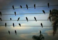 Linnut nuotteina
