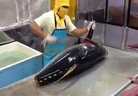 Nopeaa tonnikalan perkaamista