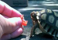 Kilpikonna tarvii vissiin silmälasit
