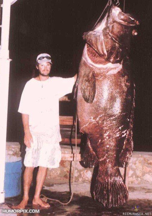 Pieni mies iso kalu