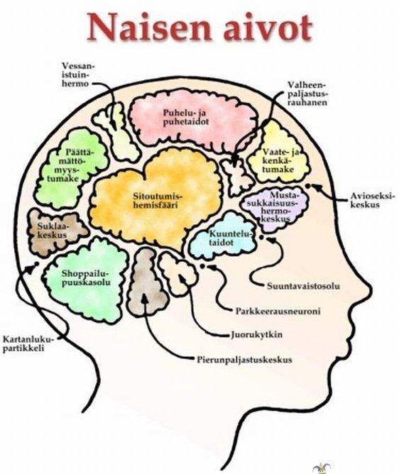 Mitä Naisen Käsilaukku Sisältää : Naisen aivot