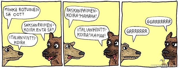 Koira Meemi